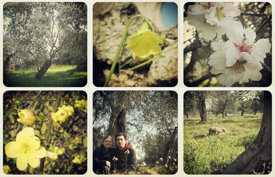 Primavera a Triggiano
