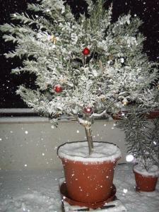olivo natalizio sotto la neve