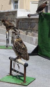 Protagonisten der Raubvogelvorführung