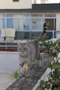 auf dem Catwalk 2