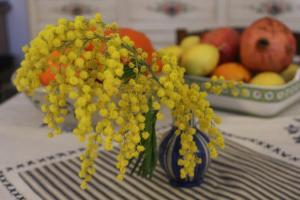 Rosas Mimose auf dem Esstisch